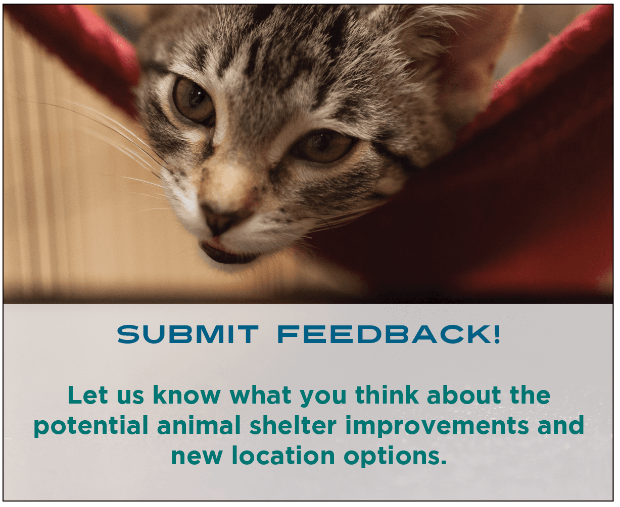 Animal Shelter Public Input - small